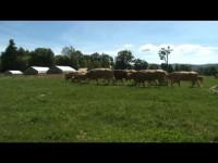 ATG - White Gates Farm
